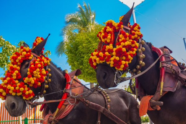 depositphotos_61318107-stock-photo-pretty-horses-with-colorful-ornaments