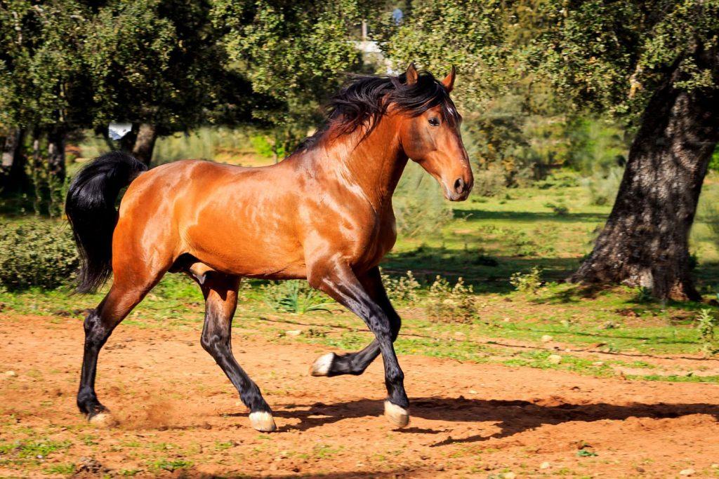 rt-caballo-3-1024x683